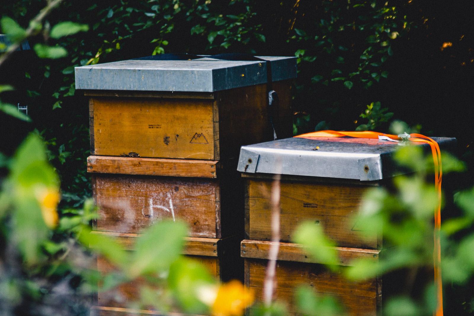 Fotos Bienenkisten